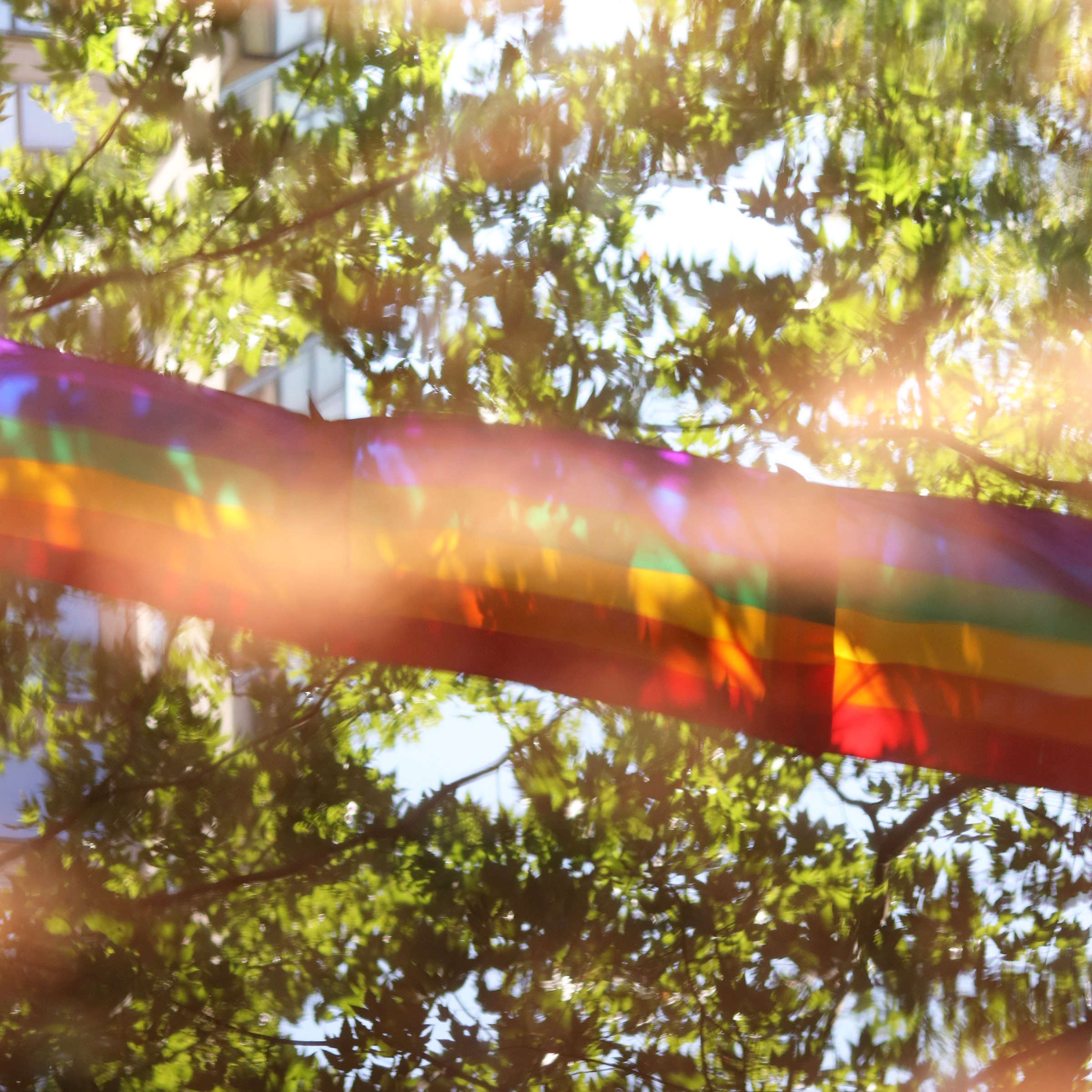 A string of rainbow flags in front of some trees